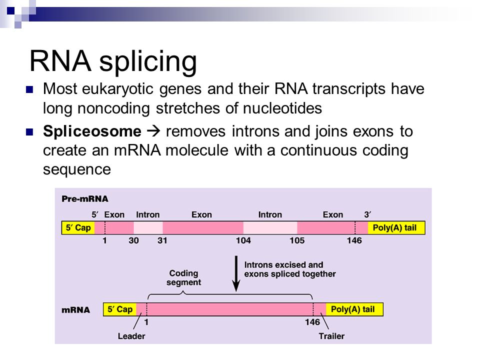 RNA splicing Most eukaryotic genes and their RNA transcripts have long noncoding stretches of nucleotides.