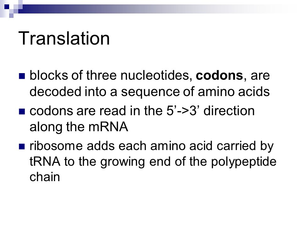 Translation blocks of three nucleotides, codons, are decoded into a sequence of amino acids. codons are read in the 5'->3' direction along the mRNA.