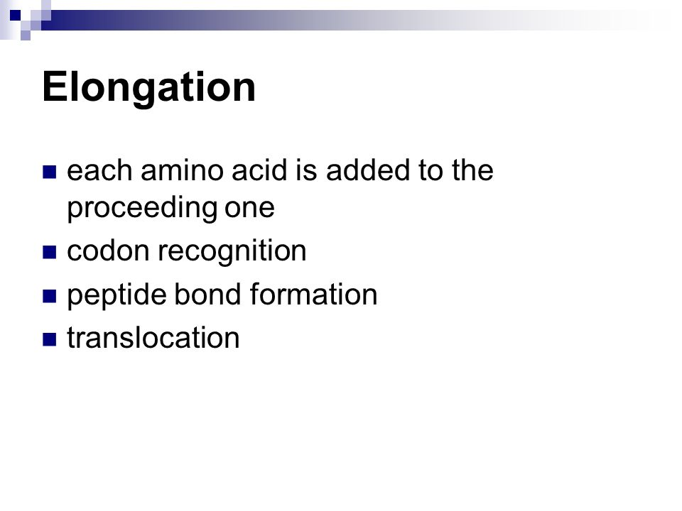 Elongation each amino acid is added to the proceeding one
