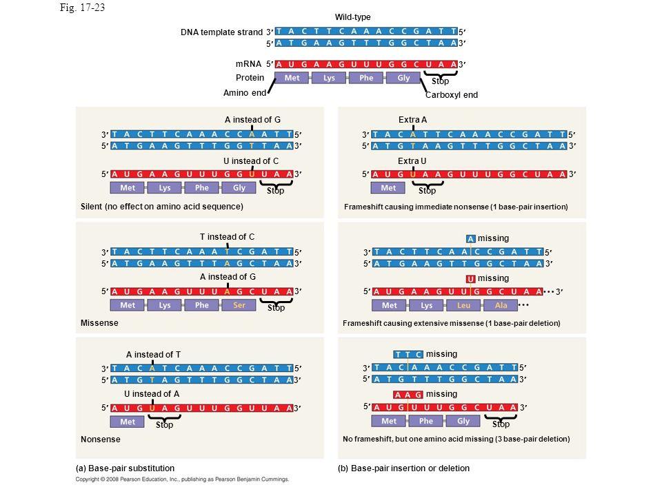 Fig. 17-23 Wild-type DNA template strand 3 5 5 3 mRNA 5 3