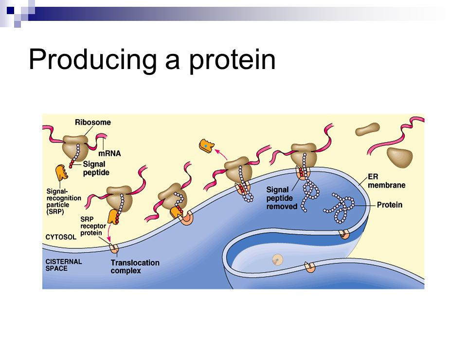 Producing a protein