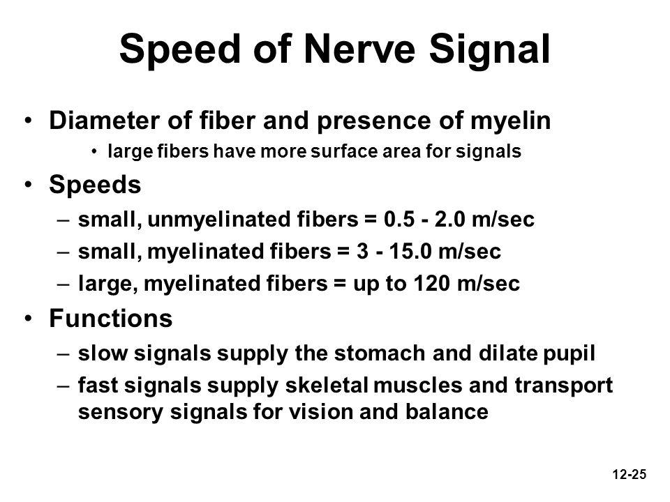 Speed of Nerve Signal Diameter of fiber and presence of myelin Speeds
