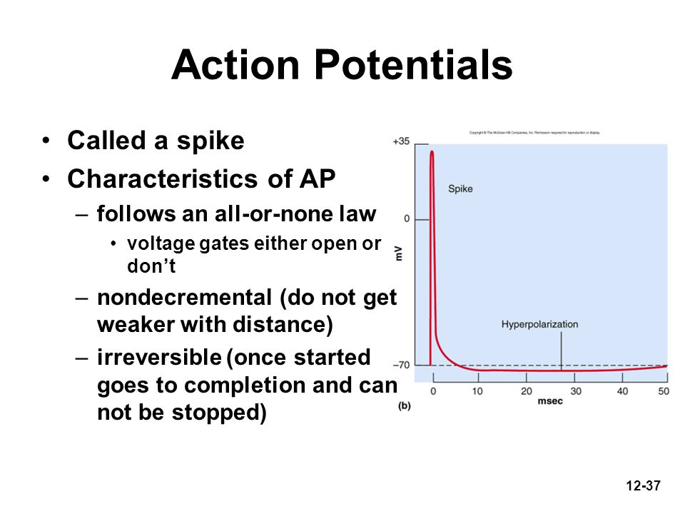 Action Potentials Called a spike Characteristics of AP