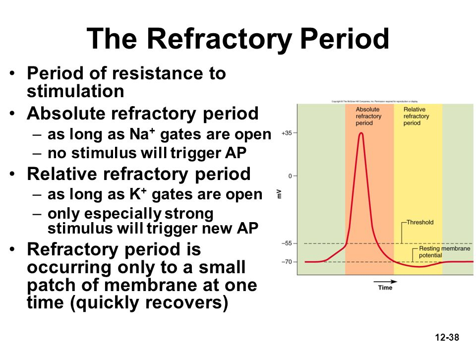 The Refractory Period Period of resistance to stimulation