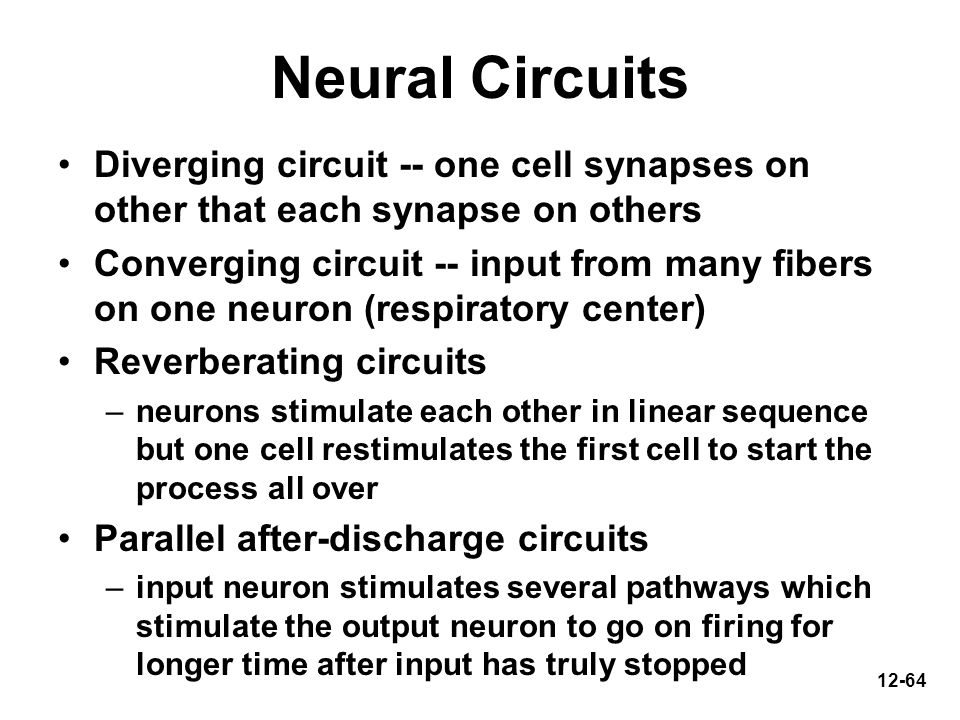 Neural Circuits Diverging circuit -- one cell synapses on other that each synapse on others.