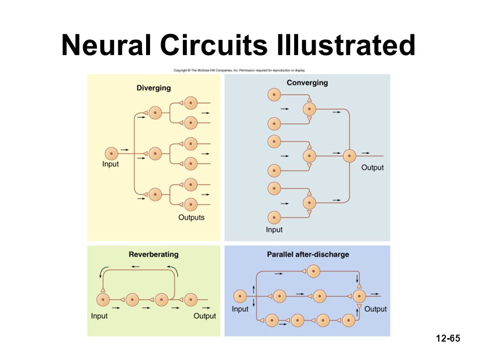 Neural Circuits Illustrated