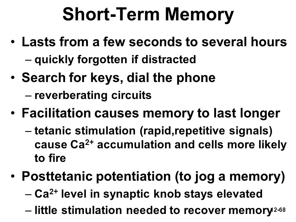 Short-Term Memory Lasts from a few seconds to several hours