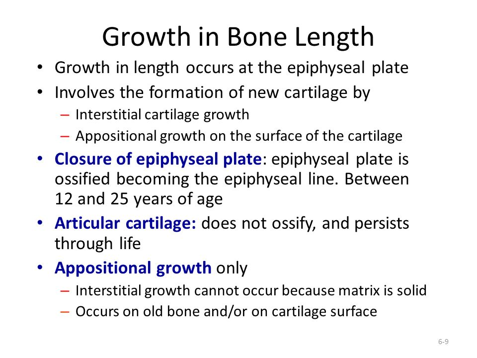 Growth in Bone Length Growth in length occurs at the epiphyseal plate