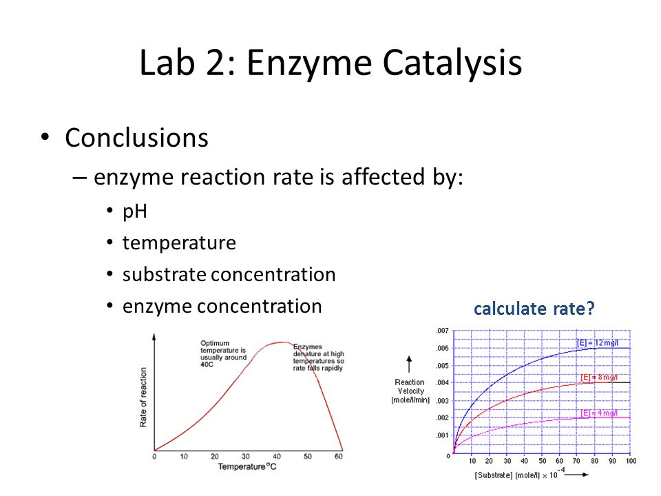 abstract for enzyme catalysis lab Abstract: ap lab enzymes, introduced us to the catalyzing proteins called, enzymes, focusing on the effects that various variables have on enzyme reaction rate to further our knowledge of enzymes, we used a variety of chemicals to stimulate different conditions.