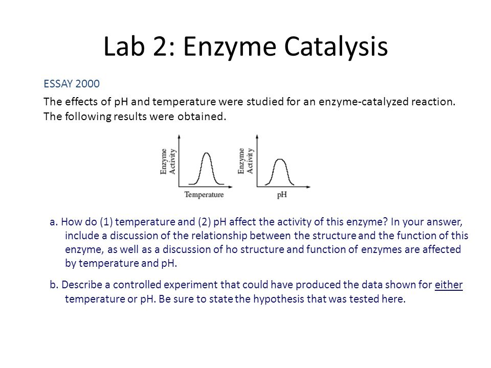 enzyme controlled reactions lab essay Essays on catalase enzyme enzyme controlled reaction-catalase 1 or reduces the rate of a biochemical reaction a catalase is an enzyme that grows in the.