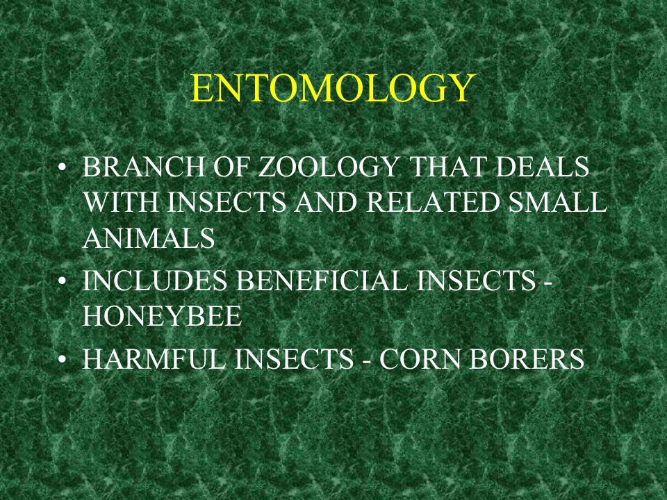 ENTOMOLOGY BRANCH OF ZOOLOGY THAT DEALS WITH INSECTS AND RELATED SMALL ANIMALS. INCLUDES BENEFICIAL INSECTS -HONEYBEE.