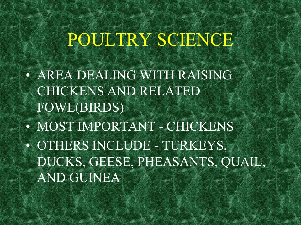 POULTRY SCIENCE AREA DEALING WITH RAISING CHICKENS AND RELATED FOWL(BIRDS) MOST IMPORTANT - CHICKENS.