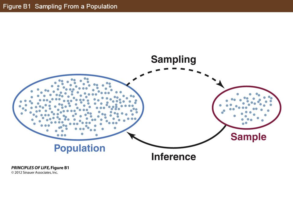 Figure B1 Sampling From a Population