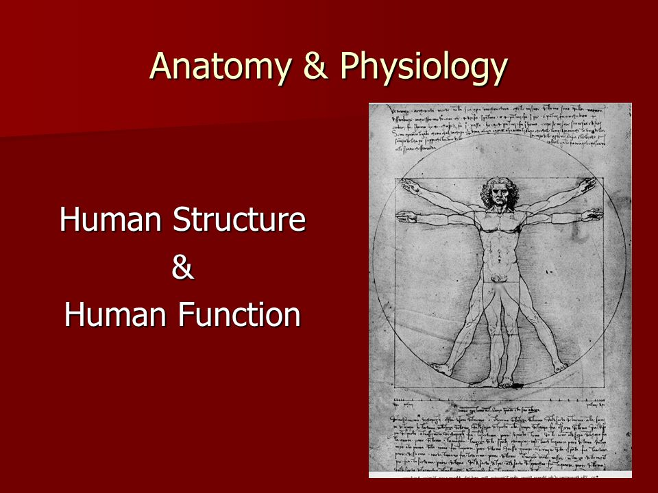Anatomy & Physiology Human Structure & Human Function
