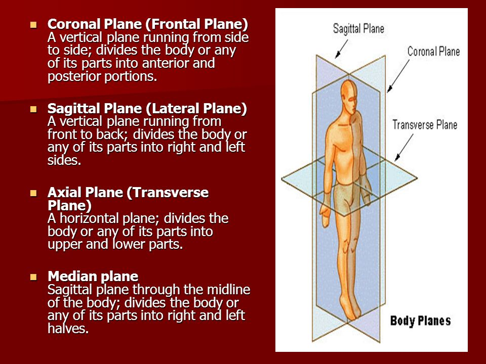 Coronal Plane (Frontal Plane) A vertical plane running from side to side; divides the body or any of its parts into anterior and posterior portions.