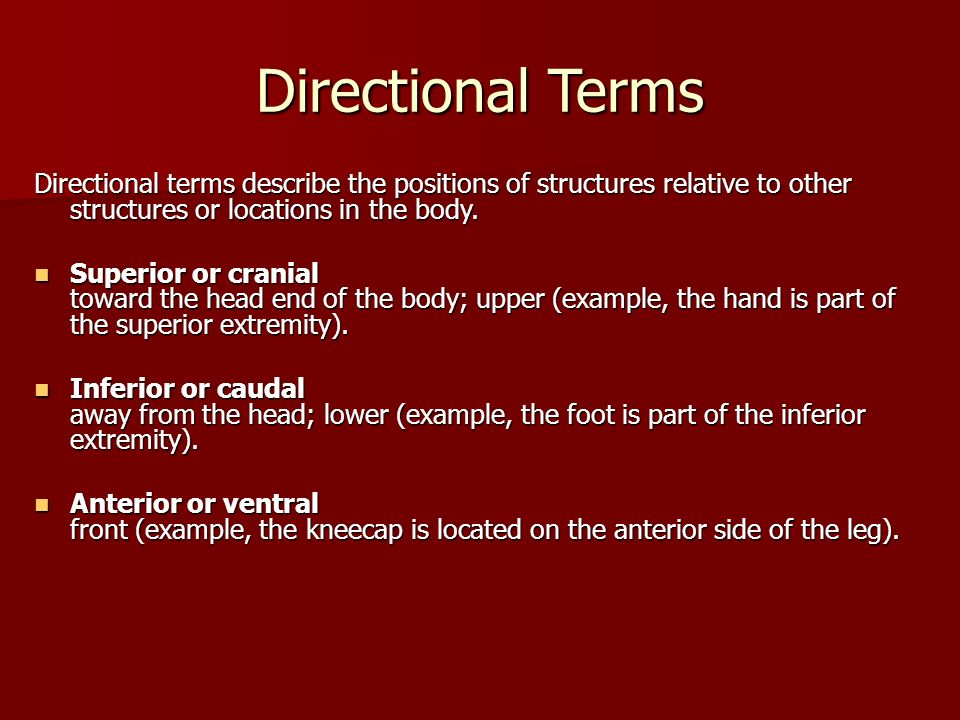 Directional TermsDirectional terms describe the positions of structures relative to other structures or locations in the body.