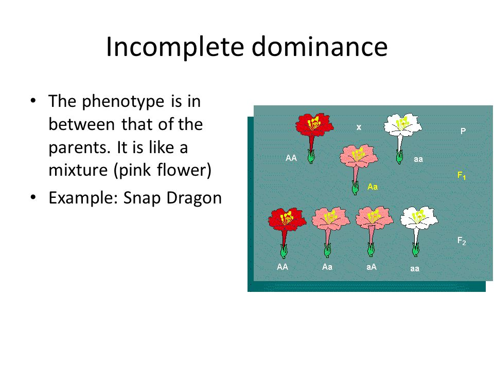 Incomplete dominance The phenotype is in between that of the parents. It is like a mixture (pink flower)