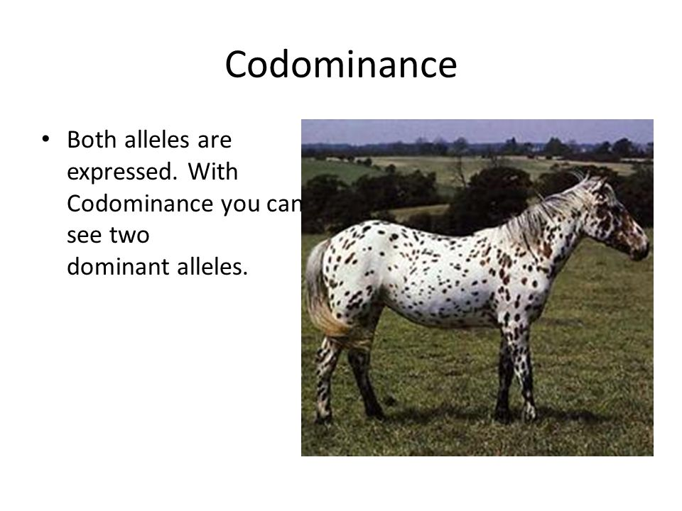 Codominance Both alleles are expressed. With Codominance you can see two dominant alleles.