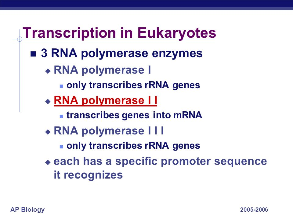Transcription in Eukaryotes