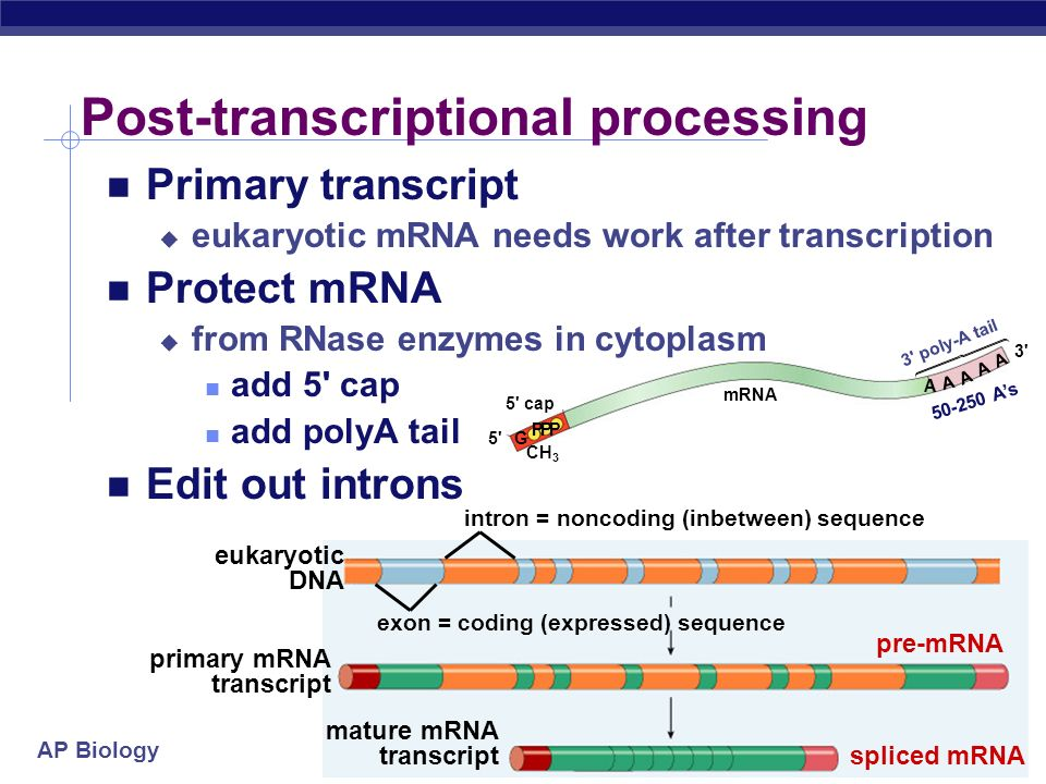 Post-transcriptional processing