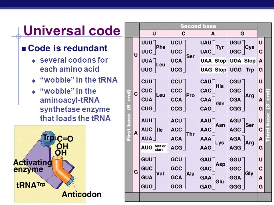 Universal code Code is redundant several codons for each amino acid