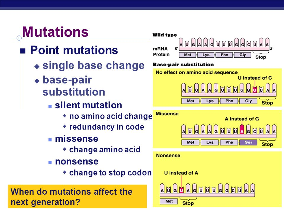 Mutations Point mutations single base change base-pair substitution