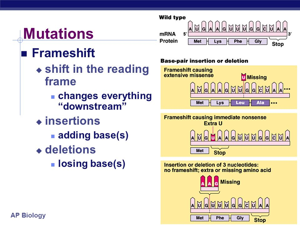 Mutations Frameshift shift in the reading frame insertions deletions