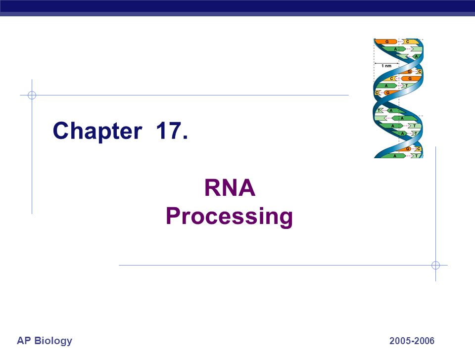 Chapter 17. RNA Processing 2005-2006