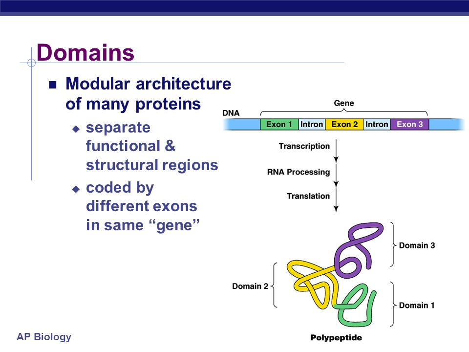 Domains Modular architecture of many proteins