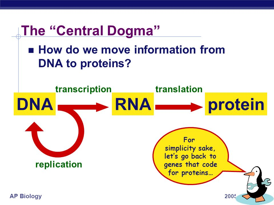 let's go back to genes that code for proteins…