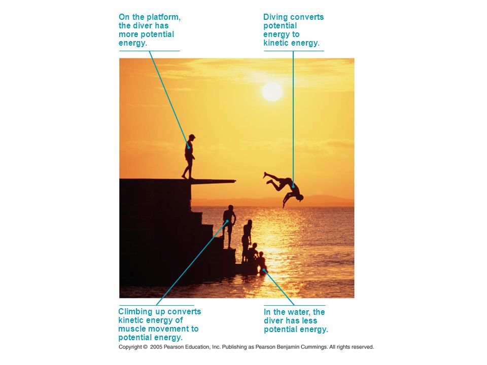 On the platform, the diver has. more potential. energy. Diving converts. potential. energy to.