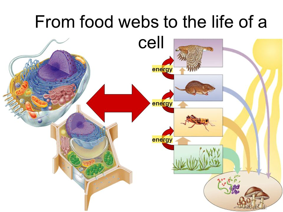 From food webs to the life of a cell