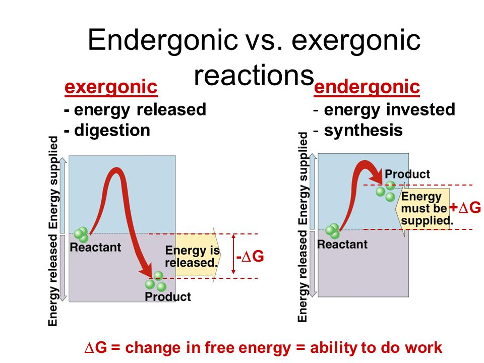 Endergonic vs. exergonic reactions