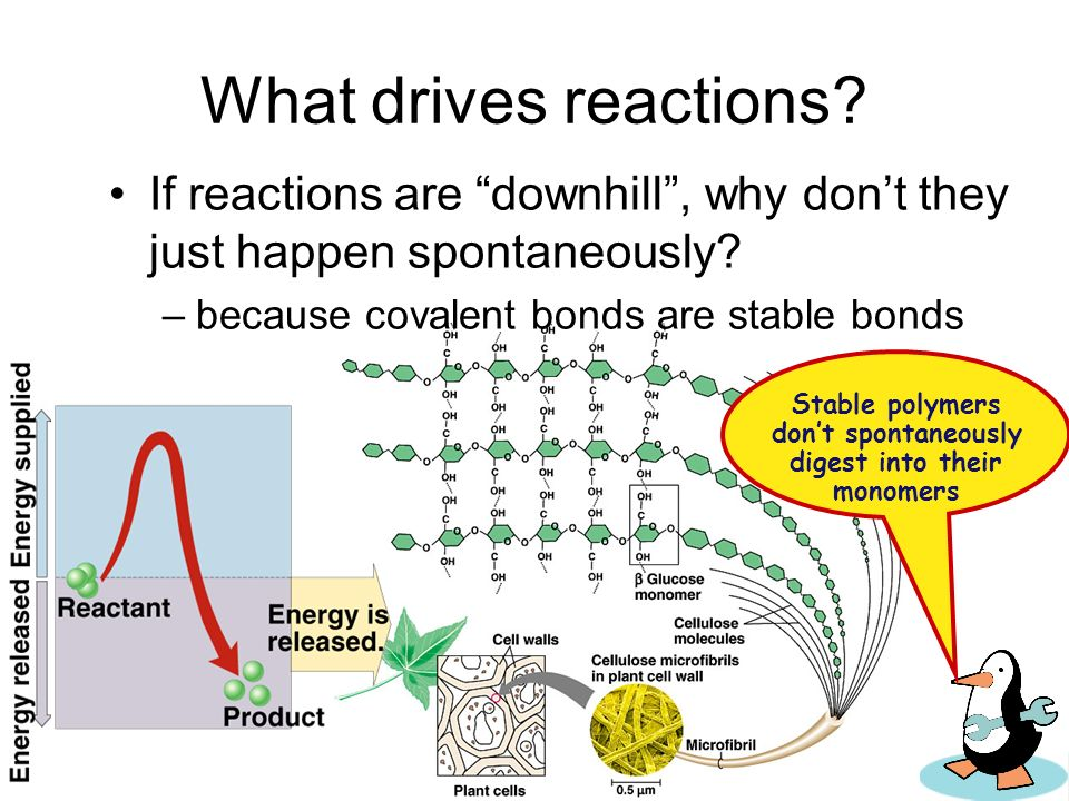 Stable polymers don't spontaneously digest into their monomers