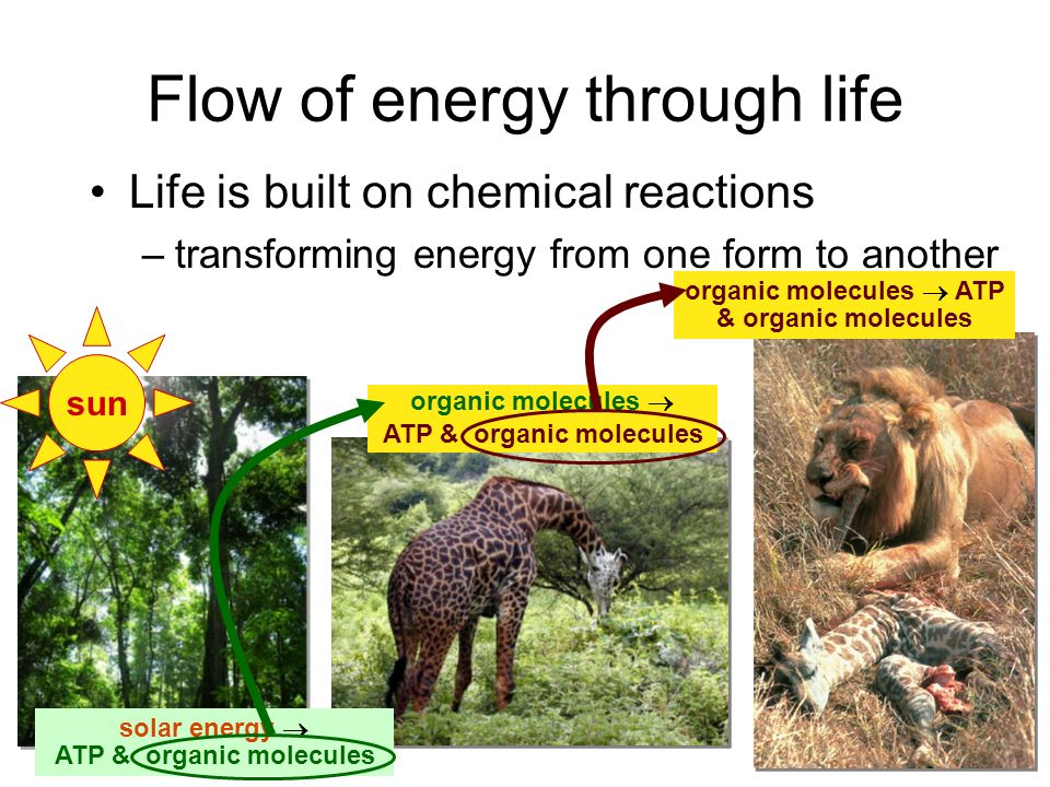 Flow of energy through life