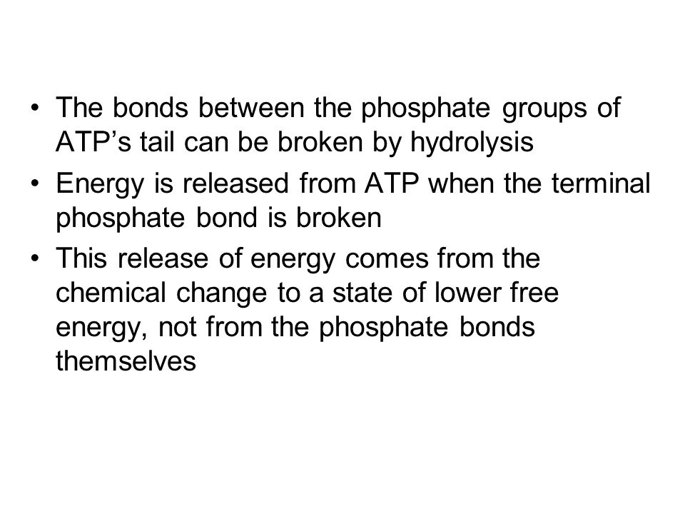 The bonds between the phosphate groups of ATP's tail can be broken by hydrolysis