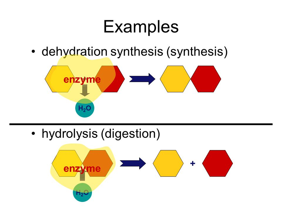 Examples dehydration synthesis (synthesis) hydrolysis (digestion)
