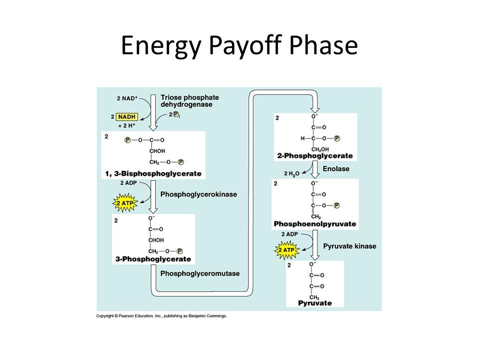 Energy Payoff Phase