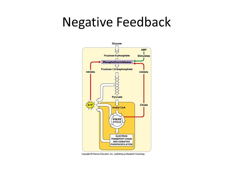 Negative Feedback