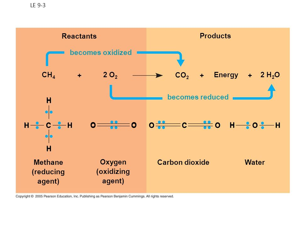 Methane (reducing agent) Oxygen (oxidizing agent) Carbon dioxide Water