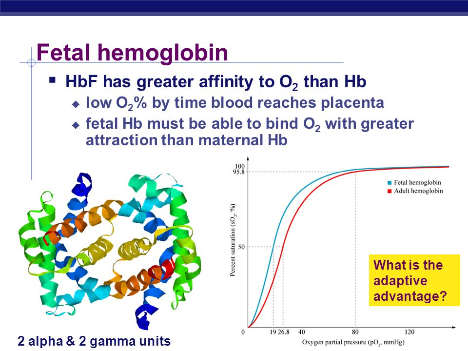 Fetal hemoglobin HbF has greater affinity to O2 than Hb