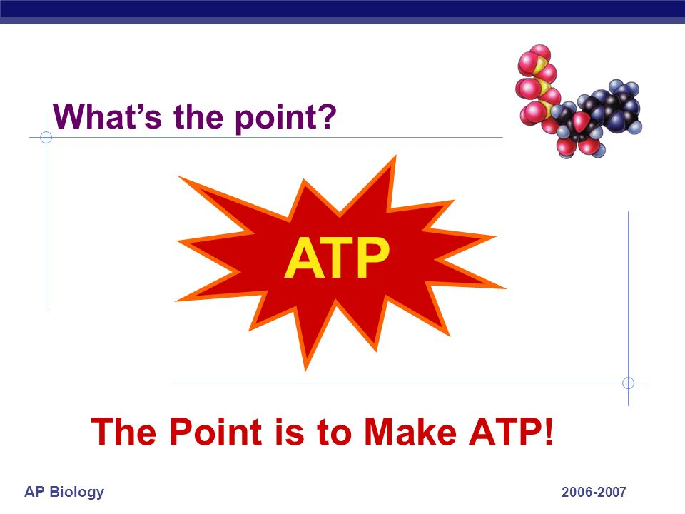 What's the point ATP The Point is to Make ATP!