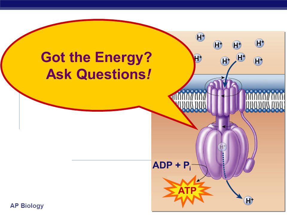Got the Energy Ask Questions!