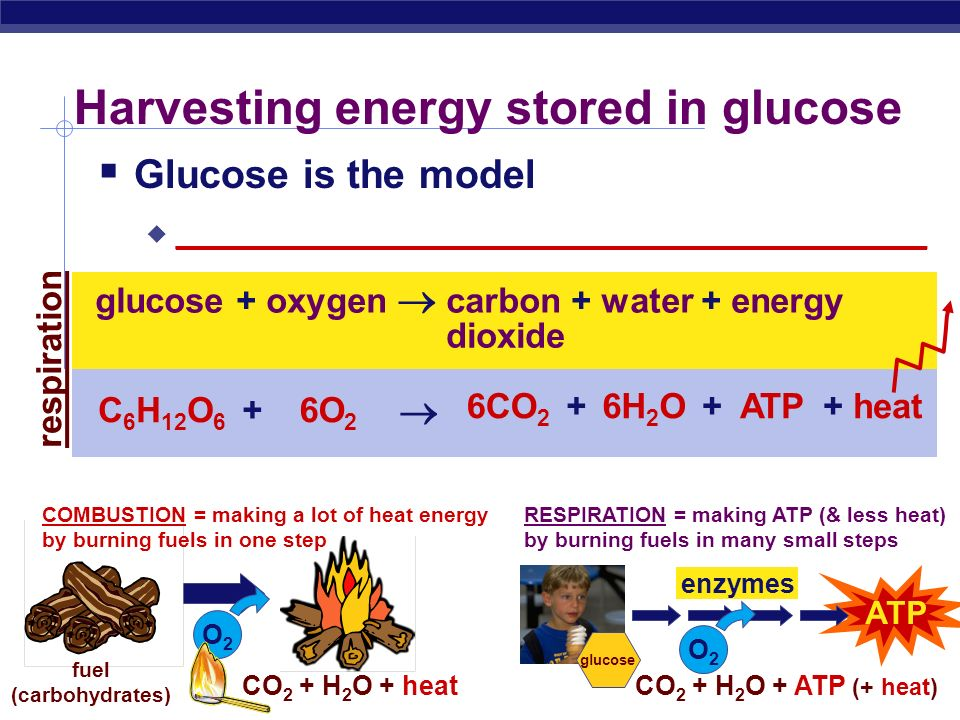 Harvesting energy stored in glucose