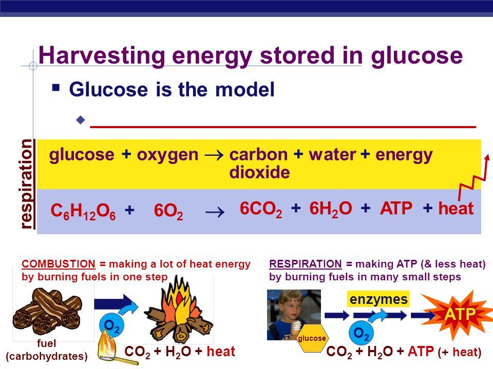 Harvesting energy stored in glucose