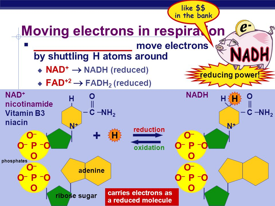 Moving electrons in respiration
