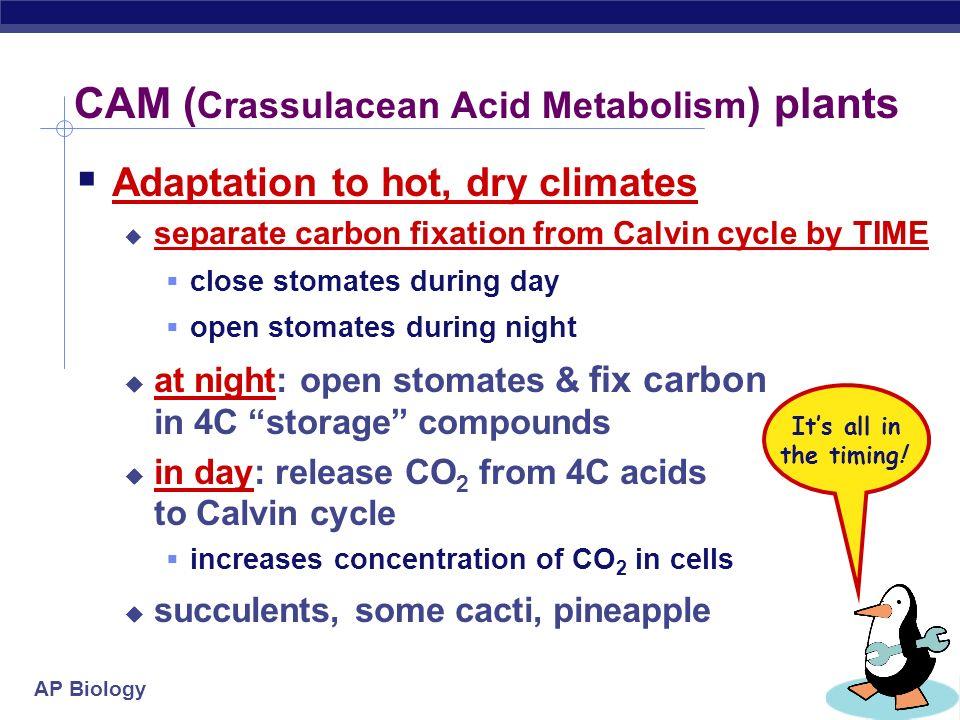 CAM (Crassulacean Acid Metabolism) plants
