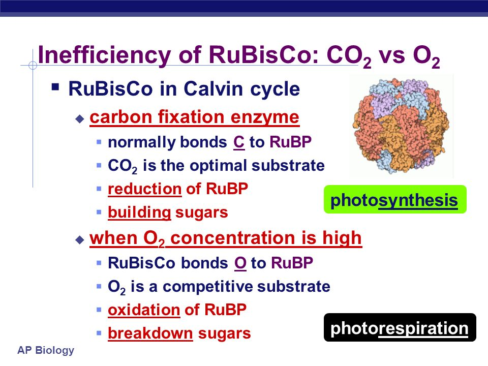 Inefficiency of RuBisCo: CO2 vs O2