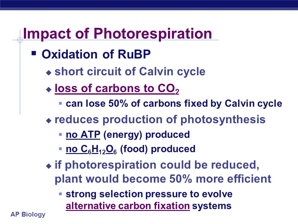 Impact of Photorespiration