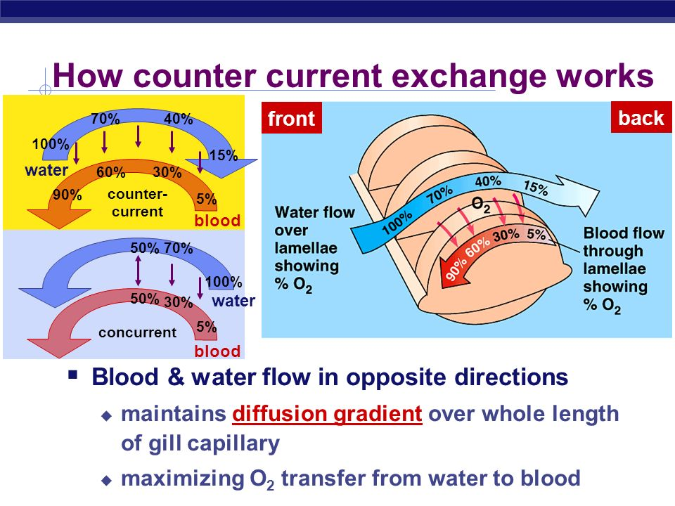 How counter current exchange works